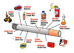 THE ANATOMY OF A CIGARETTE